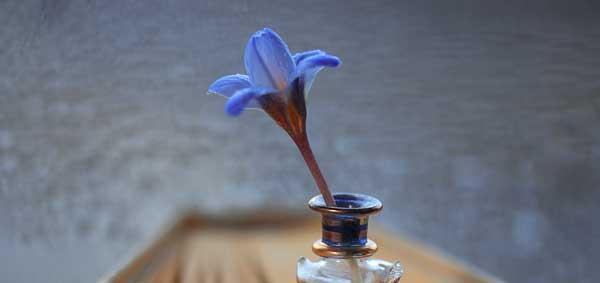 blue flower in an ink bottle