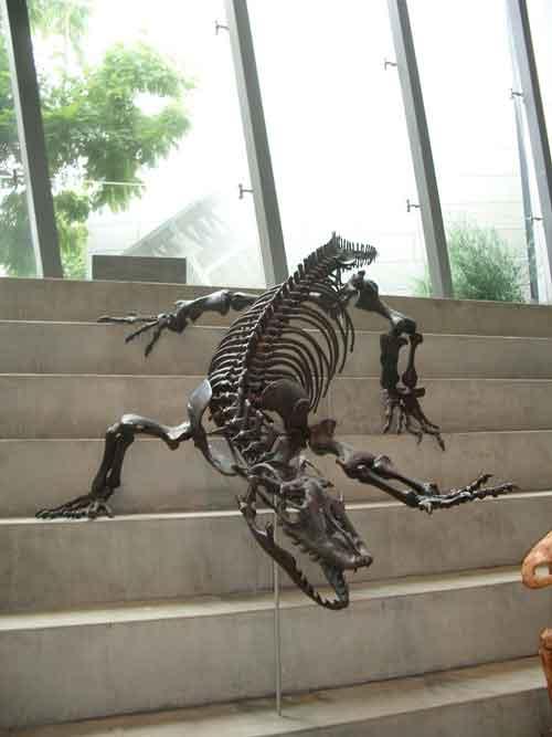 Iron sculpture of goanna skeleton on stairs
