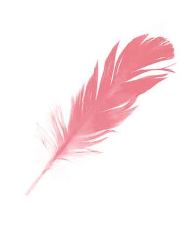 a pink feather